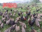 西南家禽养殖