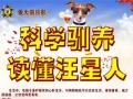 烟台爱犬俱乐部 烟台训犬 宠物训练 宠物寄养