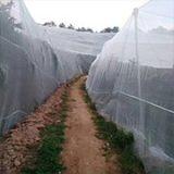 果树 果园 蔬菜防虫网厂家直销