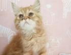 活泼可爱的小加菲猫