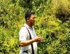 风水培训班、杨公风水培训班、学看风水、风水大师