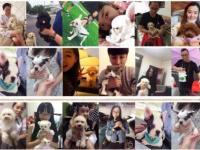 成都狗场倒闭三百低价出售各种狗狗包健康纯种博美泰迪吉娃娃