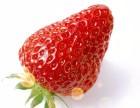台湖草莓采摘