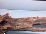 沉木,异型鱼沉木,南美沉木