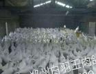 肉鸽养殖招商加盟、双方签订收购合同、合法有效