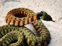 专业防蛇 驱蛇 捕蛇 诱蛇 毒蛇找《全民》更专业