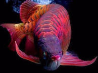 罗湖专业鱼缸租摆,包月护理,清洗鱼缸,治疗鱼病