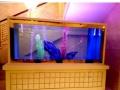 生态草缸定制 生态鱼缸定做 酒店淡水鱼缸定做 大型