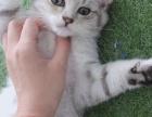 自己家的小猫出售