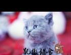 蓝猫宠物猫英国短毛猫英短蓝猫活体折耳立耳幼猫纯