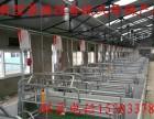 新建猪舍规划设计自动化喂猪设备料线猪场料线