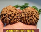 湛江市哪里有卖小叶紫檀 海南黄花梨佛珠?文玩店铺