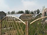 京郊的京沪高速农家院加盟 种植养殖