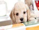 哪里有卖可卡的犬舍 好一点的可卡要多少钱