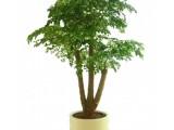 金坛绿植租赁零售服务,专注室内花木养护服务