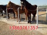 骑乘马,设特兰矮马 迷你矮马 宠物矮马 免费提供技术服务