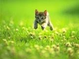 家庭寵物貓咪非籠內寄養