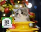 杭州哪里有宠物店 杭州哪里卖宠物猫便宜 杭州加菲猫价格