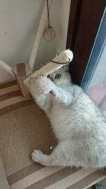 猫猫家庭寄养 只限猫
