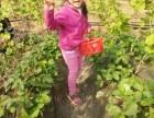宝坻区新开口镇大棚草莓小白采摘送有机蔬菜喽