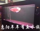 仟湖 可丽爱 森森鱼缸