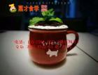 盆栽奶茶的制作方法 盆栽奶茶配方