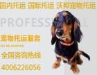 上海寵物托運公司排名