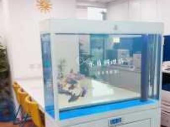 专业观赏鱼包月包活养护定期上门清洗、换水、调理水质