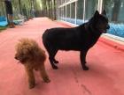 北京两千平宠物寄训乐园忍痛转让 如遇拆迁补偿款平分