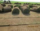 北京草坪出售,草坪批发,专业卖草坪,草坪种植,铺草坪出售草坪