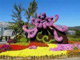 哪里有提供实惠的菊花造型_北京菊花造型厂家直销
