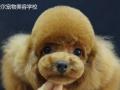 宠物美容师创业开店,宠物美容一对一