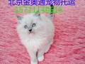 北京金奥通专业办理宠物托运