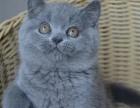 靓宠国际名犬中心 专业繁殖各种**名猫