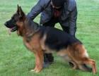 出售纯种德国牧羊犬 黑背犬幼犬 品质好质量保证