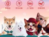 广东省内深圳东莞惠州佛山宠物托运 专线网络 贴心服务