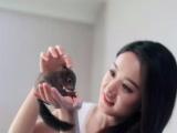 魔王黄山红腹雪地松鼠,龙猫刺猬宠物貂出售
