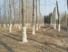 專業修樹伐樹移樹共贏園林綠化
