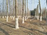 专业修树伐树移树共赢园林绿化