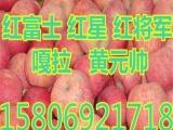 山东苹果批发价格,.2n
