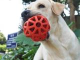 马鞍山金家庄宠物犬坏习惯纠正 大小便训练培训学校位置