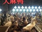 养殖鸡苗鸭苗鹅苗优质鸡苗鸭苗鹅苗包养殖技术