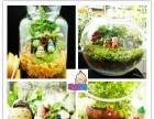创意绿植生机盎然的手工小店玩逸生活DIY连锁店