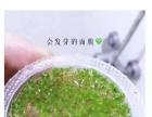 泰国进口AAA级海藻