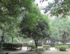 急租鑫天花园、王家冲社区、白沙苑、金沙园精装两房出租