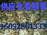 山东生姜价格产地大黄姜价格