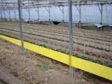 粘虫胶带 黄板诱杀 粘虫板(图)