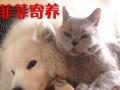 菲菲家庭 温暖宠物寄养,在自己家中寄养!
