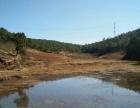 昆曲高速旧县二百亩山出租种植养殖基地