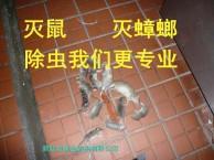 武汉三镇酒店 餐饮 商场 家庭等灭鼠 灭蟑螂 除虫服务